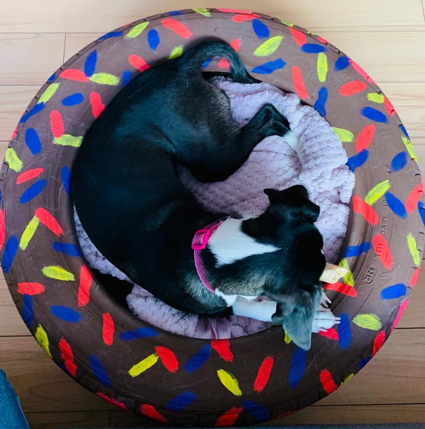 Make a dog bed in a tire / Haz una cama de perro en unallanta