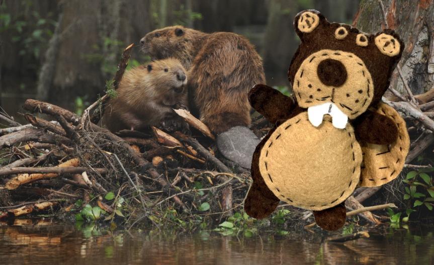 Beaver day felt craft / Manualidad de fieltro del dia delcastor